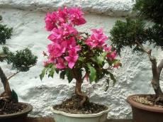 Flores en bonsai